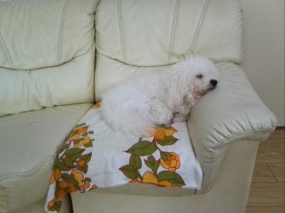 布とソファー