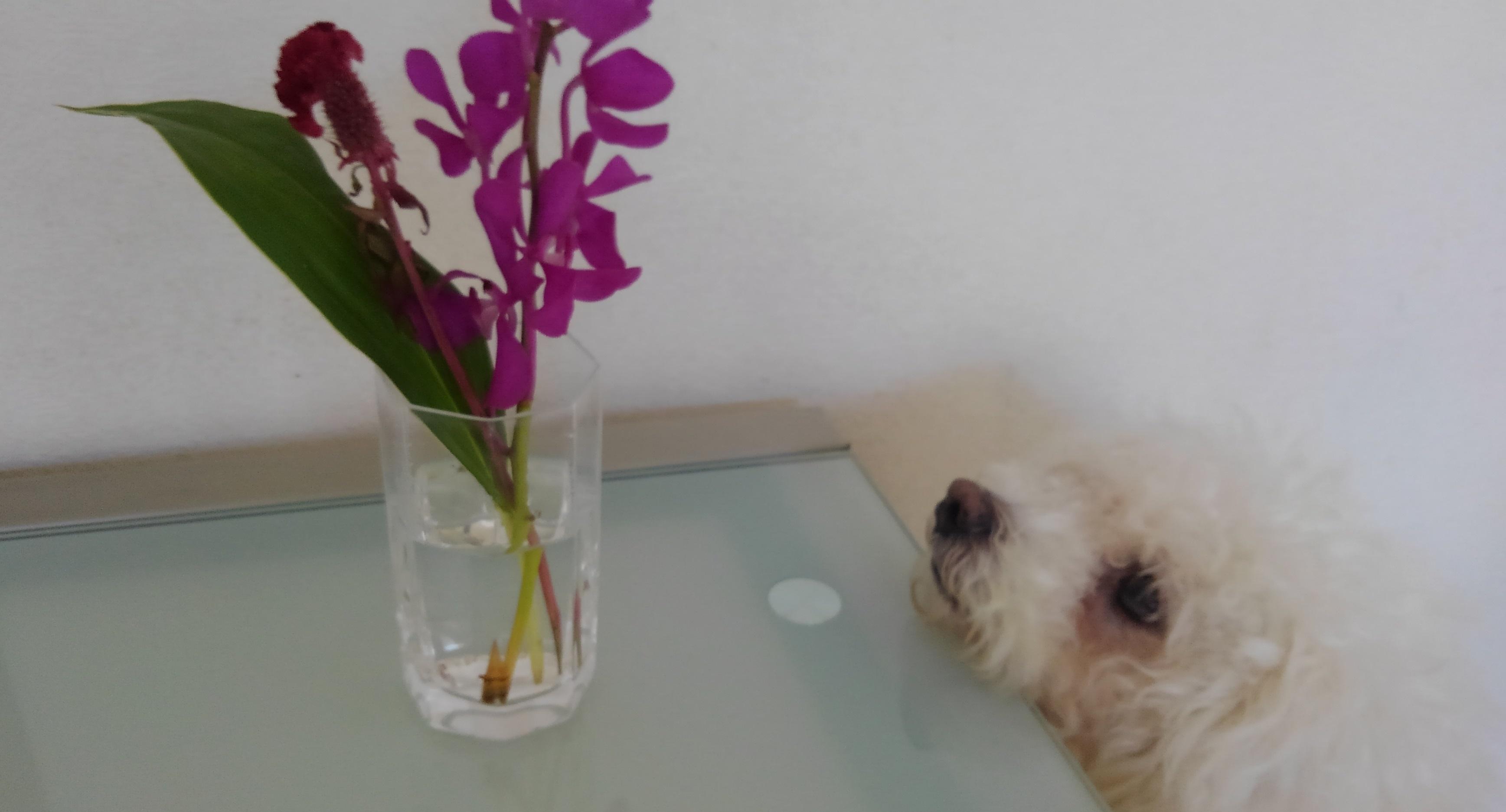 体験プランのお花を飾ってみた様子