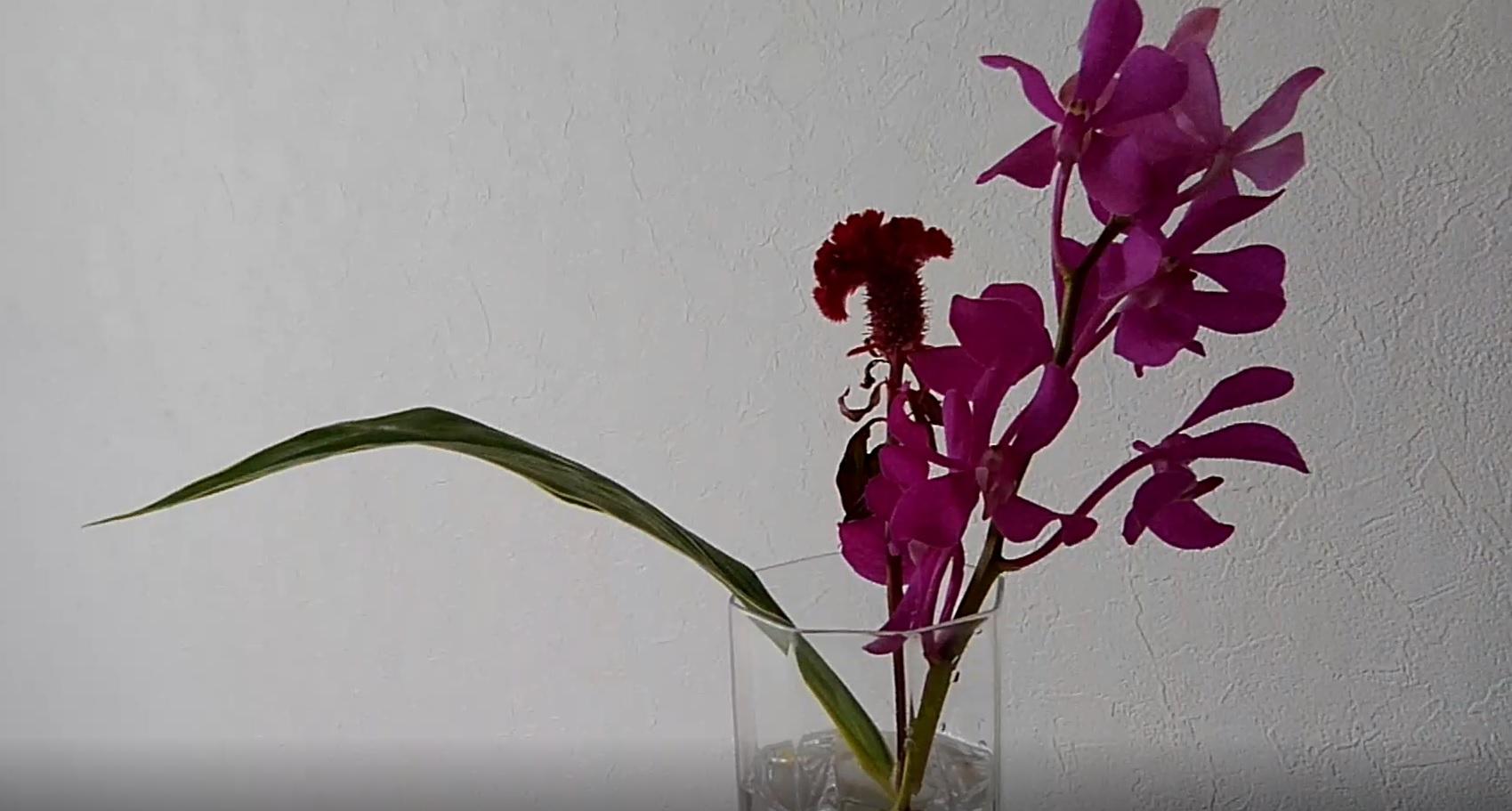 届いたお花の状態:枯れてはいません